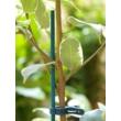 SPLIT BAMBOO festett bambusz pálcák - 40 cm-től