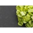 MICROTEX PE talajtakaró 1,4 x 5m